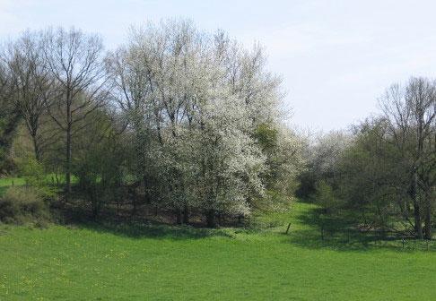 Arbres au printemps